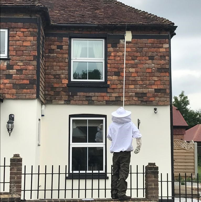 wasp pest control in Meopham, Kent